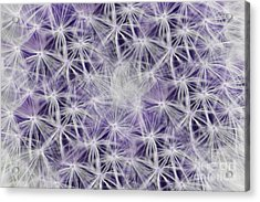 Purple Wishes Acrylic Print
