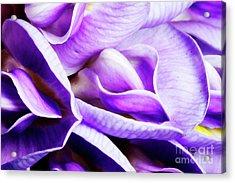 Purple Wisteria Fower Acrylic Print
