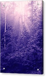 Purple Woods Acrylic Print by Nina Fosdick