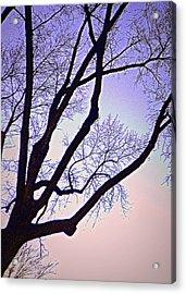 Purpler Branch Acrylic Print by Dan Stone