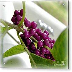 Purples And Greens Acrylic Print by Tisha  Clinkenbeard