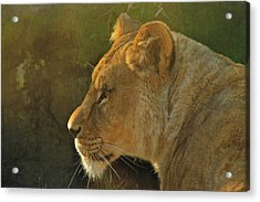 Pursuit Of Pride Acrylic Print