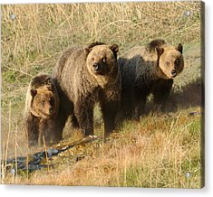 Quad Mom At Mammoth Terraces I Acrylic Print by Amy Gerber