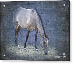 Quarter Horse In Blue Acrylic Print by Betty LaRue