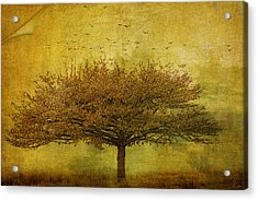Quercus Robur Acrylic Print