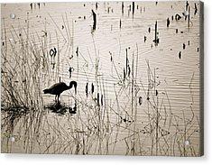 Quiet Findings Acrylic Print by Jennifer  Lane