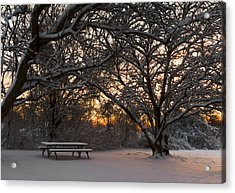 Quiet Moment Before Dawn Acrylic Print by Yelena Rozov