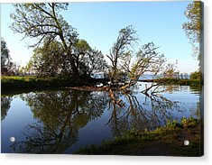 Acrylic Print featuring the photograph Quiet Reflection by Davandra Cribbie