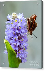 Quilling Butterfly Acrylic Print
