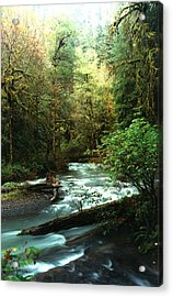 Acrylic Print featuring the photograph Quineault Rain Forest by Rick Frost