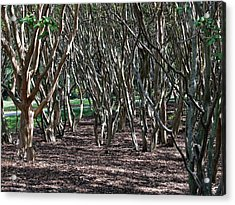 Quirky Trees Acrylic Print by Louise Mingua