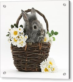 Rabbit In A Basket With Flowers Acrylic Print by Mark Taylor