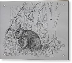 Acrylic Print featuring the drawing Rabbit In Woodland by Daniel Reed