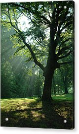 Radiant Tree Acrylic Print by Peg Toliver