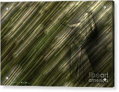 Rain Dances On The Rattan Cane Acrylic Print by The Stone Age