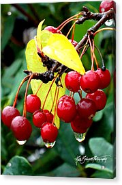Rain Drenched Acrylic Print by Ruth Bodycott