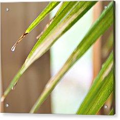 Rain Drop Acrylic Print by Malania Hammer