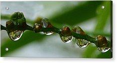 Acrylic Print featuring the photograph Rain Drops by Lynn Bolt