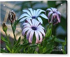 Rain Drops On Flowers Acrylic Print by Billie-Jo Miller
