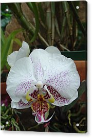 Acrylic Print featuring the photograph Rain Drops On Orchid by Charles and Melisa Morrison