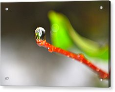 rain drops Tiny Wonder Acrylic Print by Gloria Warren
