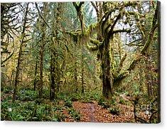 Rain Forest In Fall Acrylic Print