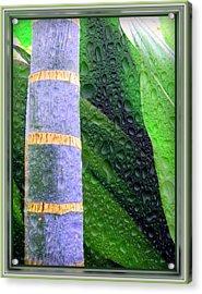 Rain Forest Acrylic Print by Mindy Newman