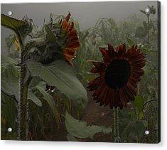 Acrylic Print featuring the photograph Rain In The Sunflower Garden by Diannah Lynch
