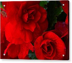 Rain Kissed Roses Acrylic Print