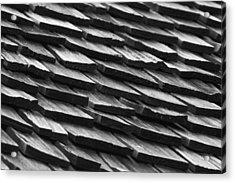 Rain Shield Acrylic Print by Nicholas Evans