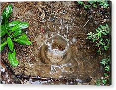 Acrylic Print featuring the photograph Rain Splash by Ester  Rogers