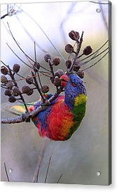 Rainbow At Play Acrylic Print