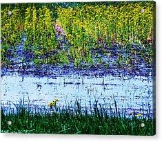 Rainbow Field Acrylic Print by Todd Sherlock