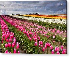 Rainbow Fields Acrylic Print by Mike  Dawson