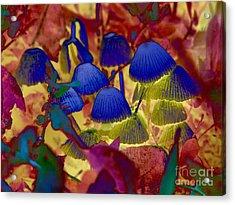 Rainbow Mushrooms Acrylic Print by Erica Hanel