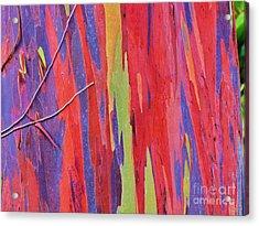 Acrylic Print featuring the photograph Rainbow Of Eucalyptus Bark by Michele Penner