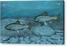 Rainbow Trout Acrylic Print by Walter Colvin