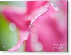 Raindrop Acrylic Print by Kim Fearheiley