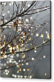 Raindrops And Leaves Acrylic Print