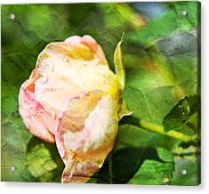 Raindrops And Roses Acrylic Print