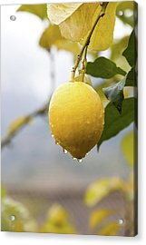 Raindrops Dripping From Lemons. Acrylic Print by Guido Mieth