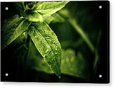 Raindrops Acrylic Print by Jason Naudi Photography
