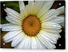 Raindrops On A Daisy Acrylic Print