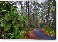 Rainforest - Port Macquarie - Australia Acrylic Print by Bryan Freeman