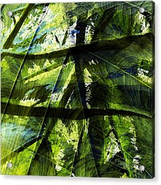 Rainforest Abstract Acrylic Print by Bonnie Bruno