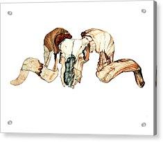Ram Skull 2 Acrylic Print by Alfred Dominic Ligammari II