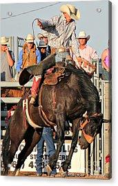 Ranch Bronc Rider Acrylic Print by Rachelle Rice