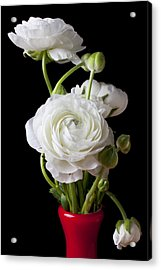 Ranunculus In Red Vase Acrylic Print by Garry Gay