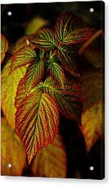 Raspberry Leaves Acrylic Print