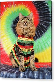 Acrylic Print featuring the photograph Rasta Cat by Joann Biondi